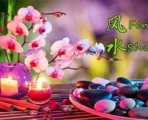 pagina sus floare de cires